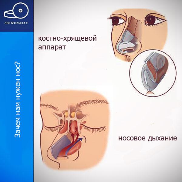 заложенность носа - зачем нужен нос